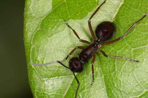 anonymous ant