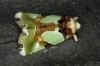 Nacna sp perhaps splendens