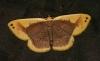 unidentified moth 3