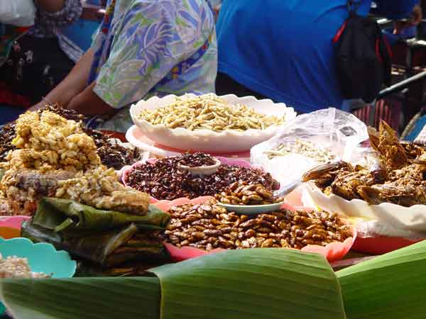 a variety of insects on sale in the market