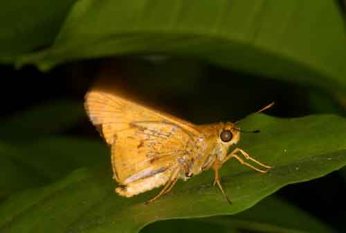 anonymous skipper 4