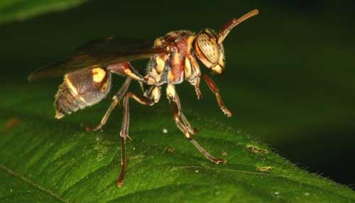 Hymenoptera 5