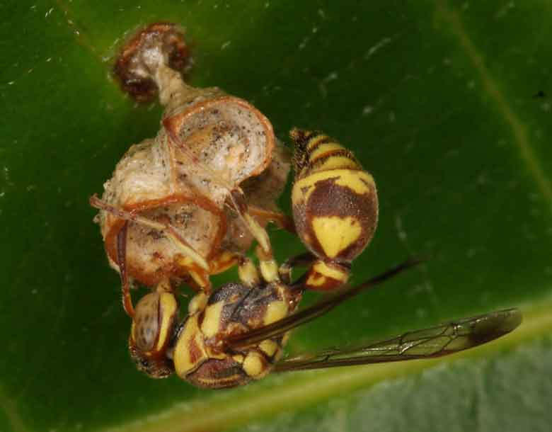 wasp architecture