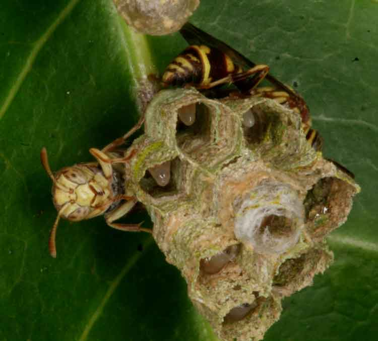 more wasp architecture