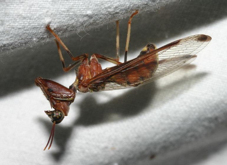 wasp IMG_1316