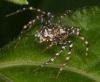 Jumping spider1