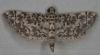 Crambidae, Spilomelinae - Metoeca foedalis