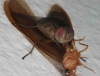 fly with termite prey