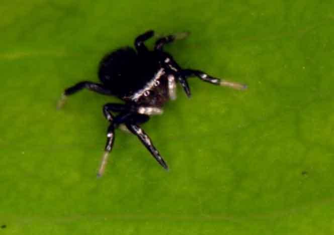 even tinier spider