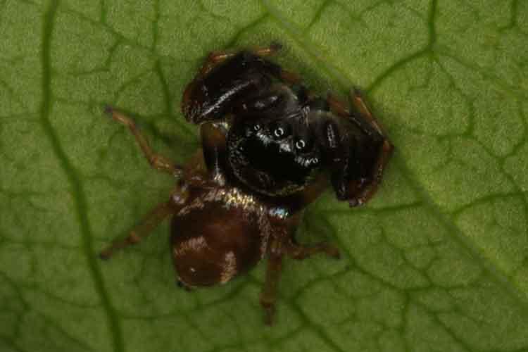 spider-6