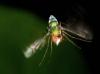 so I aimed the camera above the fly