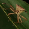 small bug profile