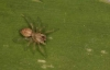 another tiny spider