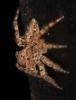 spider on my bedroom window