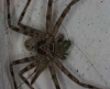 spider-with-gasshopper-prey
