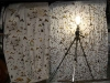 moths attracted to the light on Doi Angkhang