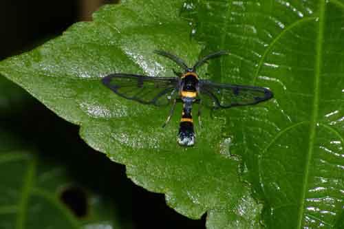unidentified-  new species or genus