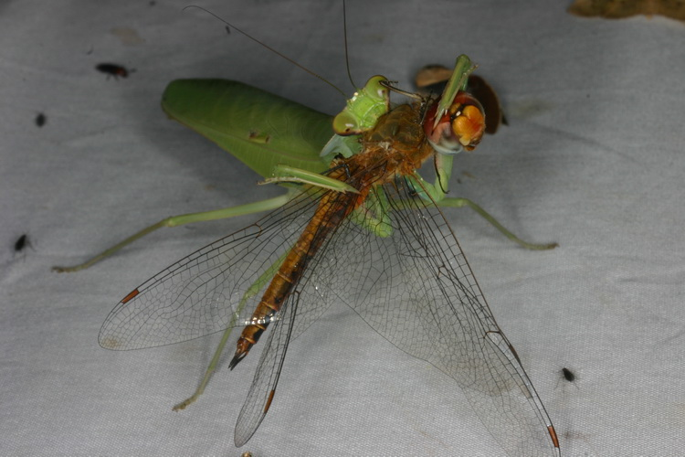 end of a dragonfly