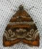 Choreutis sp. (Choreutidae)