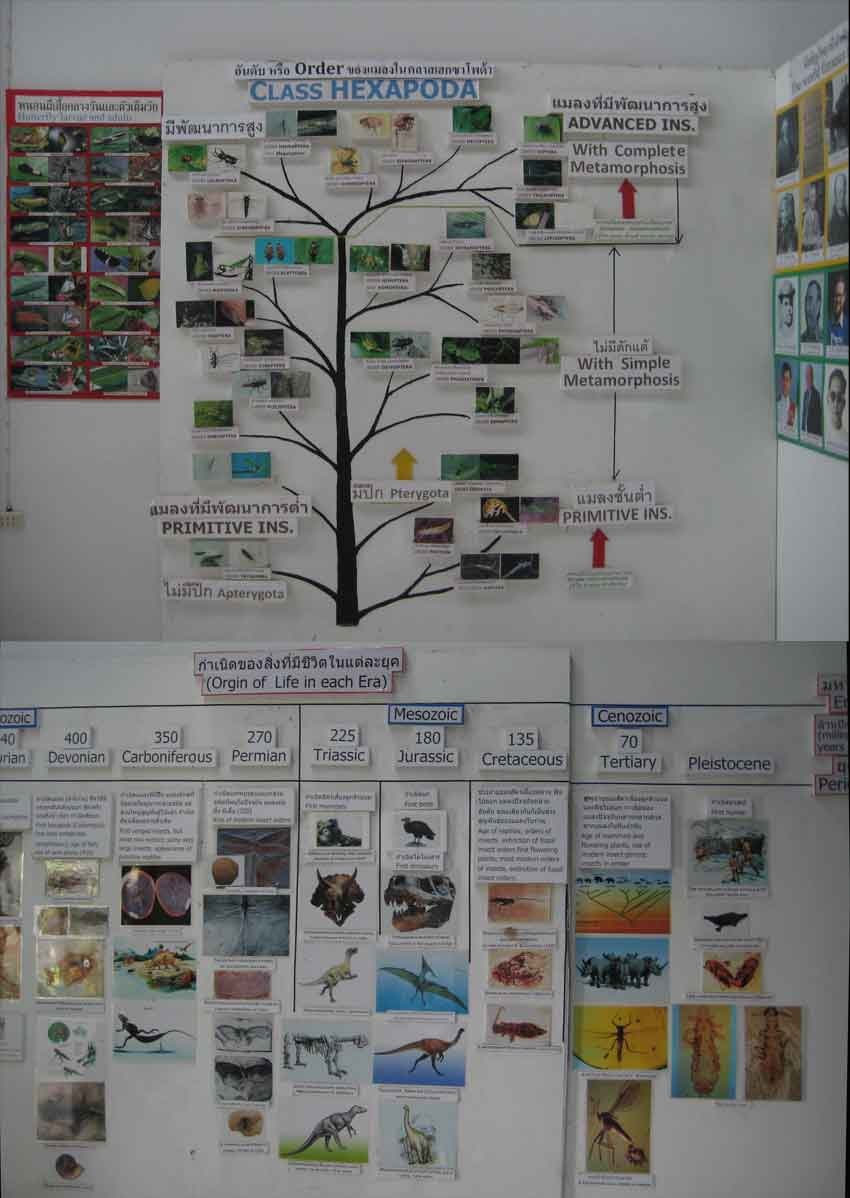 informative charts and displays