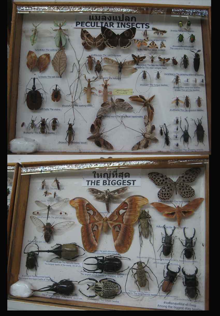 many examples of fascinating insects