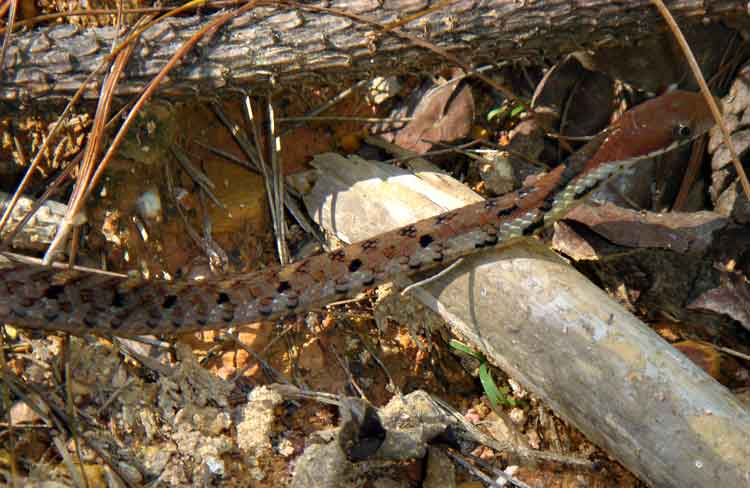 snake from the garden