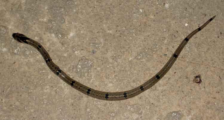 snake 6
